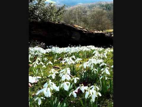 Snowdrop Gardens By Great British Gardens Youtube