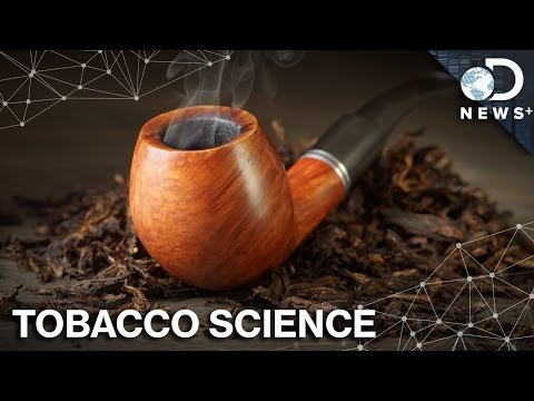 Why Tobacco Naturally Makes Addictive Poison
