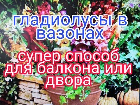 Букетная посадка ГЛАДИОЛУСОВ в ГОРШКИ и ВАЗОНЫ, СУПЕР СПОСОБ