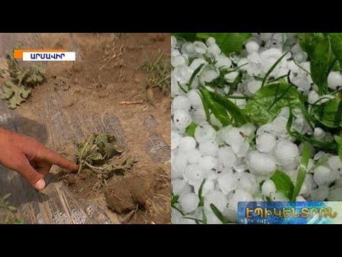 Տեղատարափ անձրևն ու հզոր քամին մեծ վնաս են հասցրել գյուղատնտեսությանը. բողոքի ակցիա