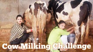 Cow Milking challenge village life of punjab