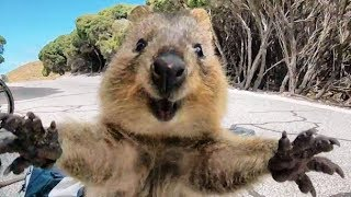CUTEST Wild Animals on the Planet