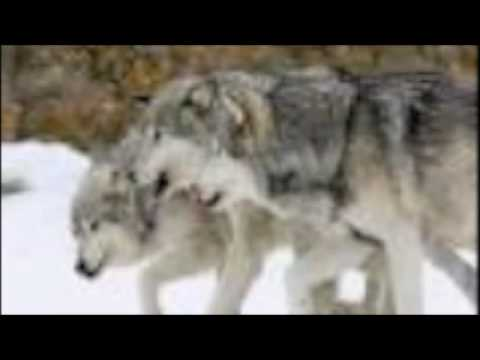 The Wolf People- Joseph Marshall III
