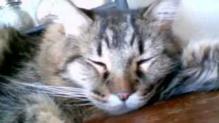 Senior Cat sleeping # 3Webcam video from August 4,