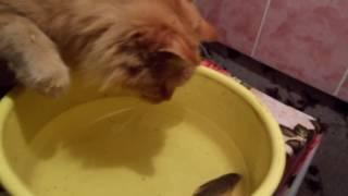СМЕШНОЕ ВИДЕО КОШКА ЛОВИТ РЫБУ.Fishing Cat
