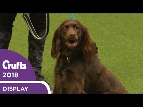 Trailrunning at Crufts 2018 | Great exercise for you and your dog!