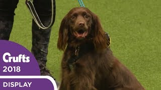trailrunning-at-crufts-2018-great-exercise-for-you-and-your-dog
