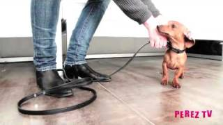 Dog Training Tips - Paws For A Minute™ With Inger - Teaching Your Dog How To Greet Guests