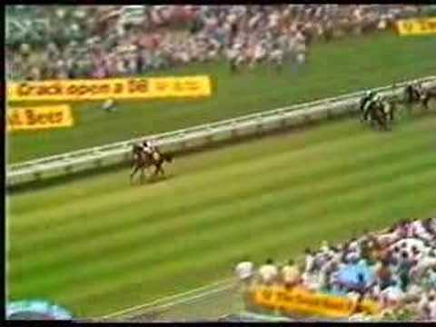 1987 Auckland Cup - KOTARE CHIEF