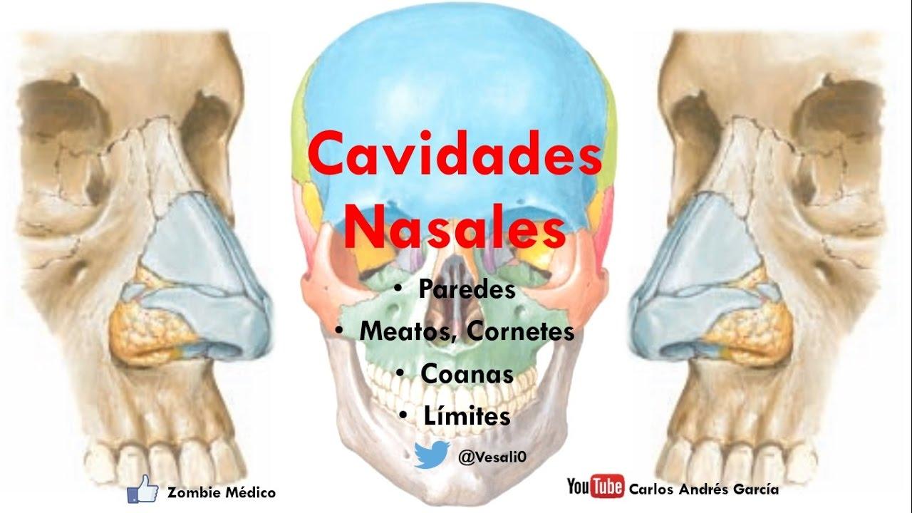 Anatomía - Cavidade Nasales (Porción Ósea, Límites, Forámenes ...