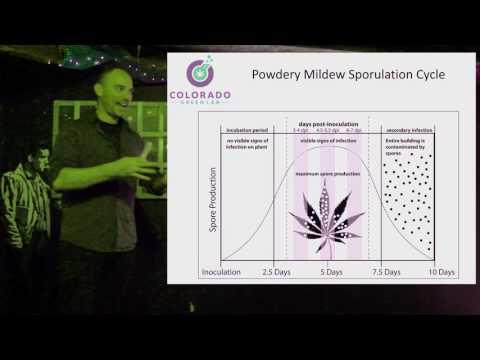Frank Talk 6/29: Powerdy Mildew Part 2