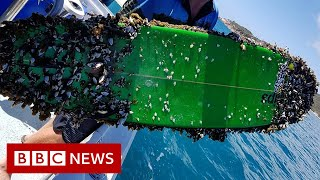 Surfer's 'shock' reunion with long-lost board - BBC News