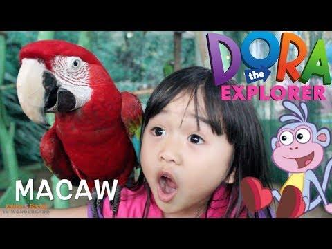 rachel-the-explorer-meet-boots-|-rachel-in-the-zoo