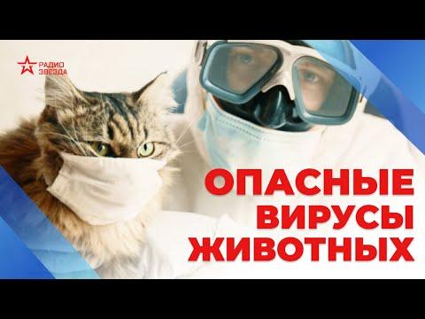 Как передаются вирусы от животных к людям? Давайте разберемся