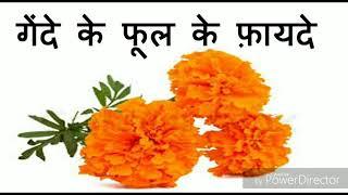 गेंदे के फूल के फायदे ll Health Benefit Of Marigold Flowers.ll Gende k fholl k fayde.
