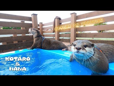 カワウソとリゾート旅行!最後にもう一度あの水族館へ行って来た  Otters Visit An Aquarium And A Resort Hotel