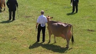Pencampwriaeth y Fuwch Laeth Orau | Supreme Dairy Cow