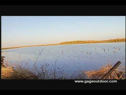 Duck Hunting Mexico With Pintail Lodge.