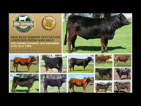 2016 Blue Ribbon Limousin Sale