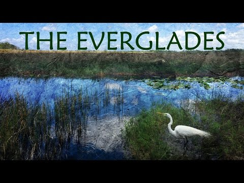 Florida Everglades. A Canoe Adventure.