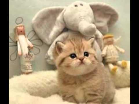 the cat returns full movie english dub