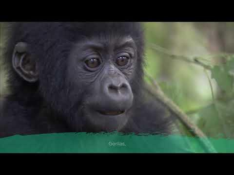 aquarel---national-geographic-kids---la-selva