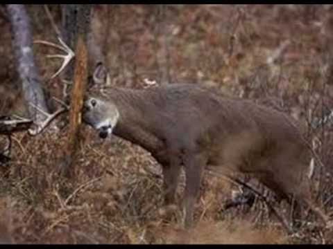The Deer Song