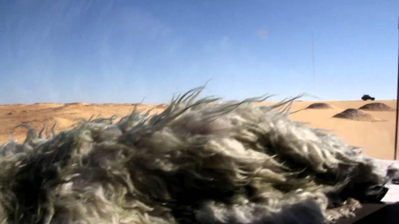 리드의 이집트 여행 - 이집트 사막투어 ④ (바하래야 사막)