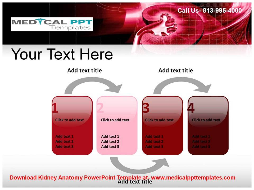 Kidney anatomy powerpoint template youtube kidney anatomy powerpoint template toneelgroepblik Images