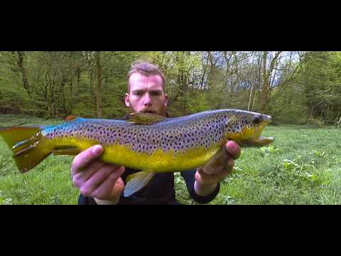 Urban Trout Fishing In The City Of Manchester