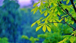9 Hours Relaxing Sleep Music + Rain Sounds 🎵 Calming Music, Insomnia (Rainy Day)