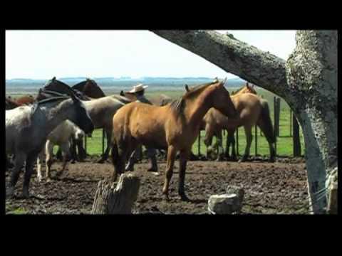 life cycles - Ana Paula Ranch