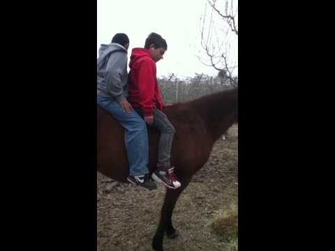 My brother and cousin get bucked off a horse