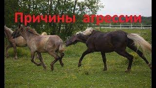 Почему лошадь нападает?