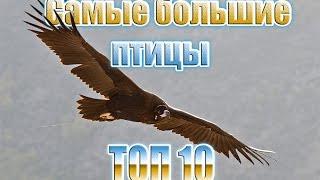 Какая самая большая птица? ТОП 10