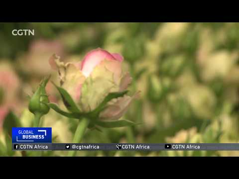 Kenyan flower companies project a 30% boost in global sales