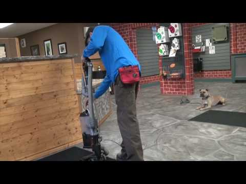 How to Stop Your Dog From Attacking the Vacuum   K9 Connection Dog Training in Buffalo NY