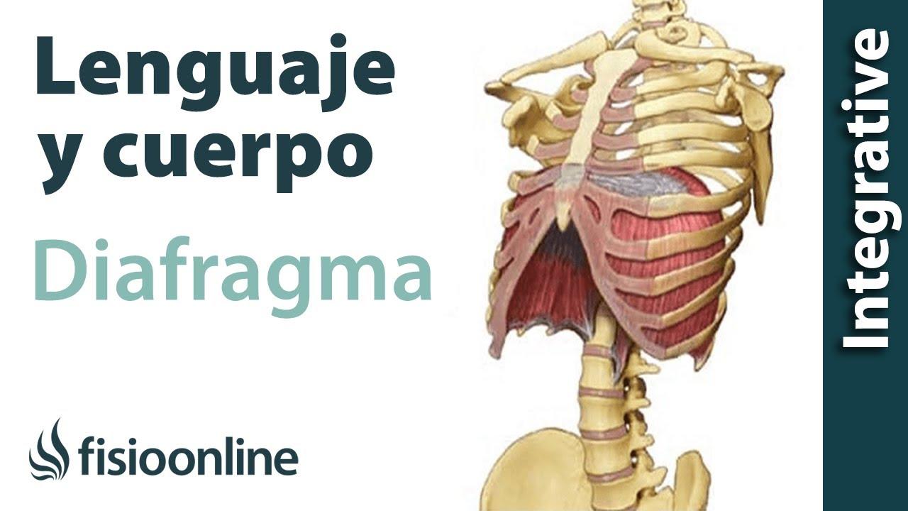 Diafragma - Lenguaje y cuerpo - YouTube