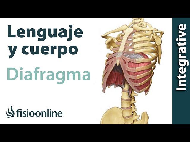 El diafragma, anatomía, importancia y funciones | FisioOnline