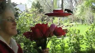 Hummingbird Facials - Wisconsin Garden Video Blog 115.avi