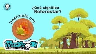 """Breves: """"Qué es la reforestación"""""""
