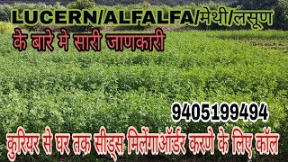 A TO Z INFORMATION ABOUT LUCERN/ALFALFA/मेथी/लसून  SEEDS FOR SEEDS CALL 9405199494