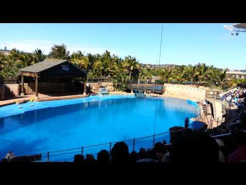 Dolphin Show @ uShaka Marine World, Durban - South Africa