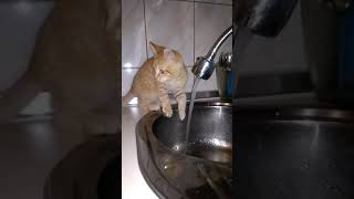 My funny cat love to play with water and take shower)