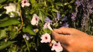 How To Plant Butterfly & Hummingbird Wildflower Gardens : Garden Savvy