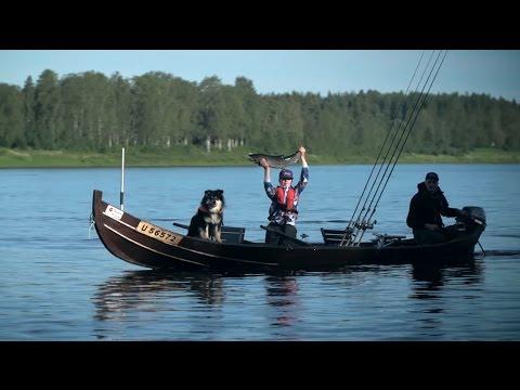 Pello - Fishing Capital of Finland: Tornio River Salmon fishing Torne River Tornionjoki