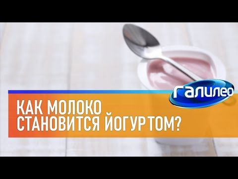 Галилео   Йогурт 🥛 [Yogurt]
