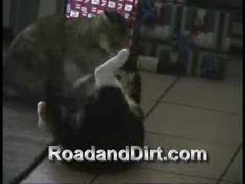 how to break up a cat fight