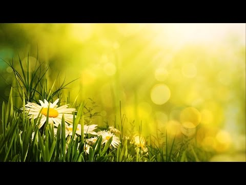 Morning Relaxing Music - Uplifting Feeling and Positive Ener