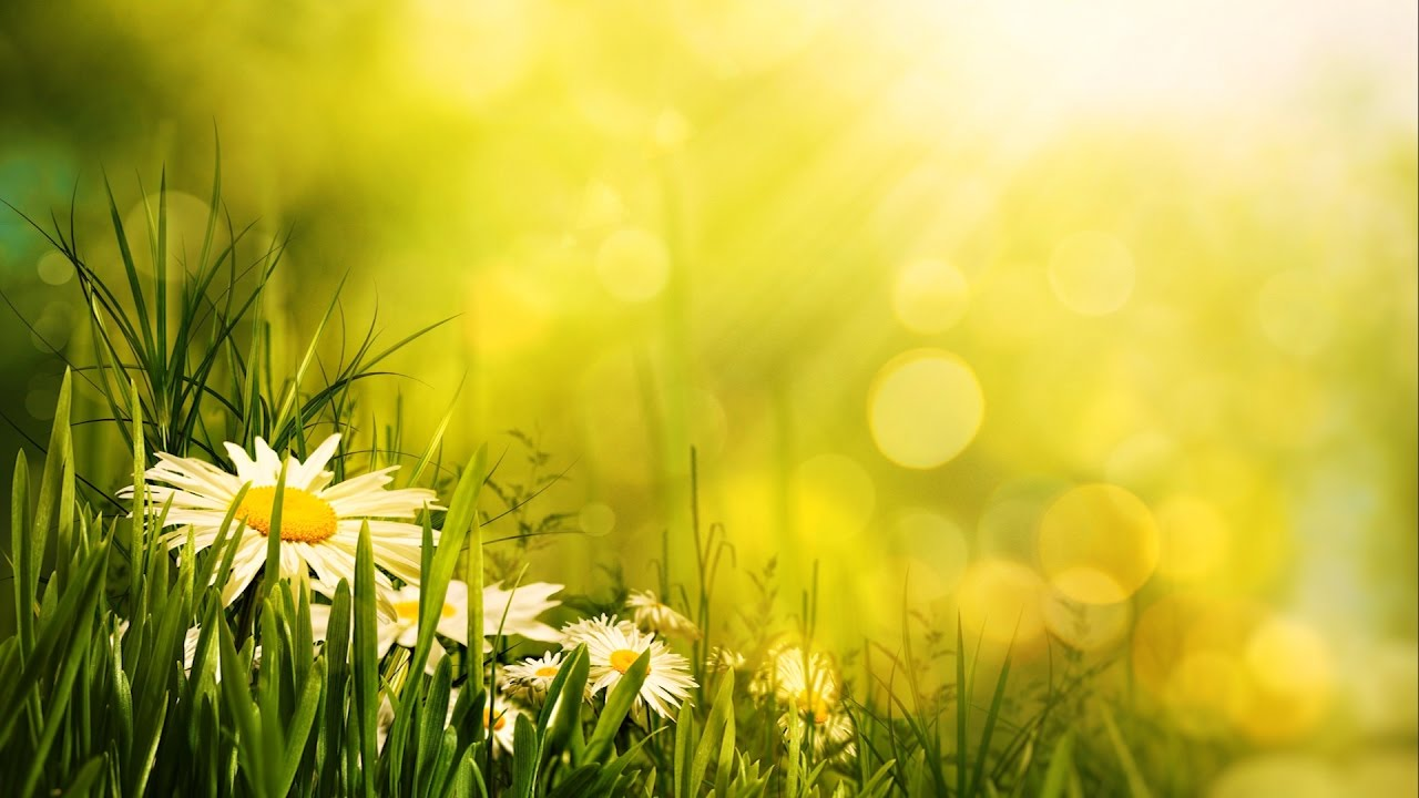 Feeling Wallpaper Hd Morning Relaxing Music Uplifting Feeling And Positive